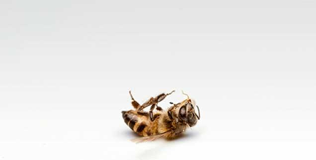 Nicht nur Bienen sind gefährdet, die Zahl aller Insekten geht dramatisch zurück, wie Forscher aus Krefeld festgestellt haben. Und damit leiden auch Vögel, für die sie Nahrungsgrundlage sind (Foto: istockphoto/Derweduwen Marrcel)