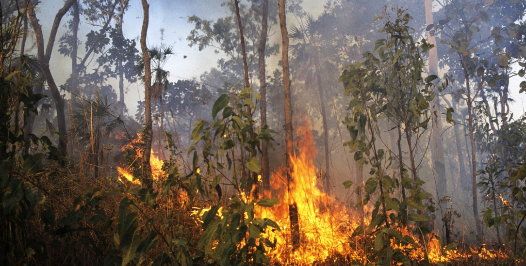 Der UN-Prozess stockt: Und auf der Welt brennt es weiter wie hier im Kakadu-Nationalpark in Australien (pa/Tack)