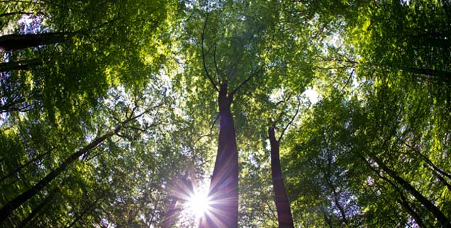 Bäume haben heilige Orte markiert, längst bevor es Kirchtürme oder Minarette gab. (Foto: pa/Pleul)