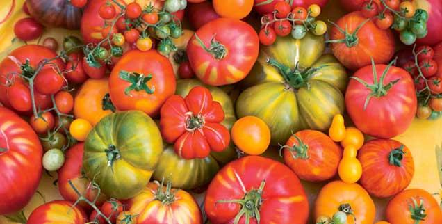 Tomaten, so bunt wie das Leben, das gibt es höchstens noch in Bioläden, aber nicht mehr in herkömmlichen Supermärkten. Den weltweiten Saatgutmarkt dominieren wenige Konzerne (Foto: istockphoto/Liza McCorkle)