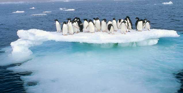 Die ersten - und nicht die letzten - Opfer des Klimawandels: Pinguine drängen sich auf abschmelzendem Eis eng zusammen. (Foto: Tui De Roy/Minden Pictures/Corbis)