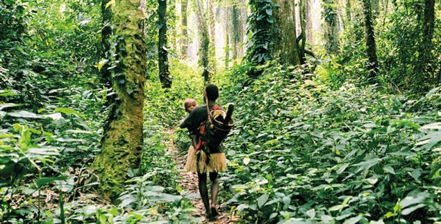 Grünes Zuhause: Für Angehörige der sogenannten Pygmäen-Völker ist der zentralafrikanische Regenwald Heimat und Grundlage ihrer Kultur. Doch Zäune und bewaffnete Ranger verwehren ihnen den Zutritt in Gebiete, die als Nationalpark deklariert sind. (Foto: Kate Eshelby/Survival International)