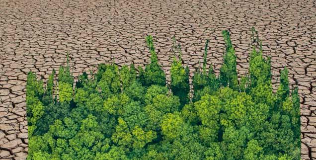 Hitze, Dürre, Krisen-Klima: Wann ändern wir das, was wir ändern müssen? (Fotos: istock by Getty/fotoVoyager; happy8790)