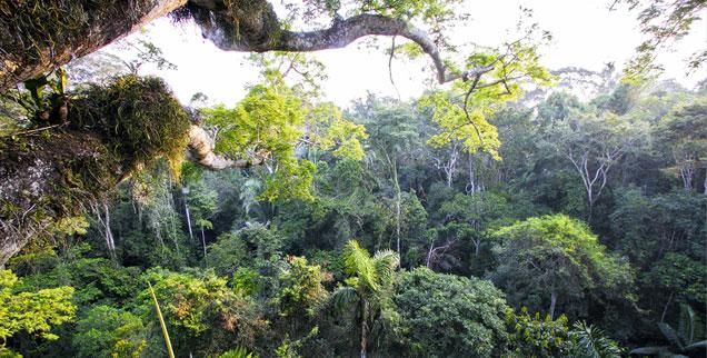 Regenwald in Peru: Eine Sorge ist, dass die Goldgräber einfach in andere Naturschutzgebiete oder in Lebensräume indigener Völker weiterziehen. (Foto: Foto: PA/WILDLIFE/S.Muller)