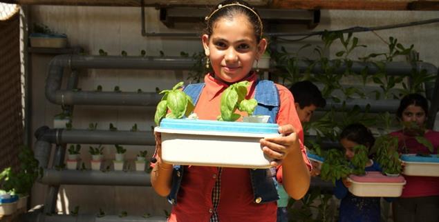 Grünes Glück: Ein Mädchen im Flüchtlingslager Za'atari erntet Basilikum, gewachsen auf Matratzenschaum (Foto: University of Sheffield)
