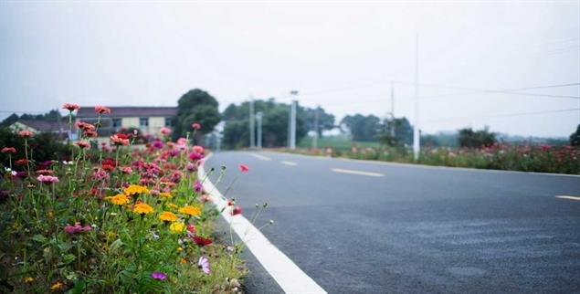 Erfreut das Auge und die Bienen: Blühstreifen am Straßenrand (Foto: istockphoto/yipengge)
