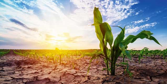 Verdorrte Pflanzen, Risse im Boden: Viele Landwirte sind durch die Trockenheit in Existenznot geraten. (Foto: fotolia/Bits and Splits - stock.adobe.com)
