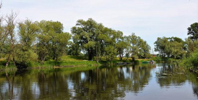 Südlich von Havelberg: Am Fluss wächst wieder Schilf. (Foto: Hans-Jürgen Röder)