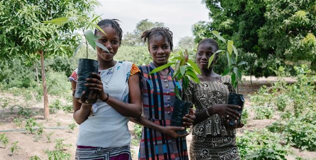 Waldgärten entstehen: Im Senegal finanziert Ecosia die Arbeit von »Trees for the Future« (Foto: Ecosia/Joshi Gottlieb)