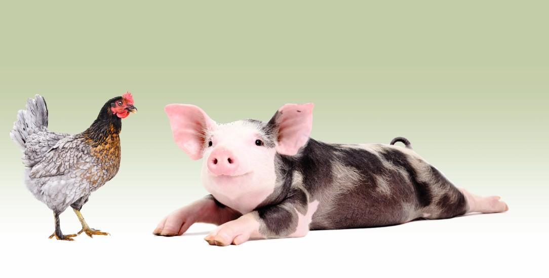 Am besten keine »Nutztiere« mehr: Das wünschen sich Tierrechtsaktivistinnen, die wollen, dass Tiere leben können und nicht nützen müssen (Foto: istockphoto/Sonsedska)