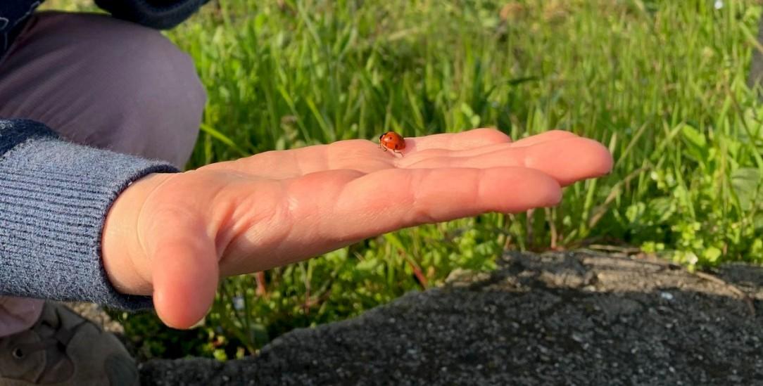 Käfer Karl auf der Hand von Johanna, deren Papa Moritz ein Erinnerungsfoto von den zwei neuen Freunden gemacht hat. Foto: Moritz Schlarb