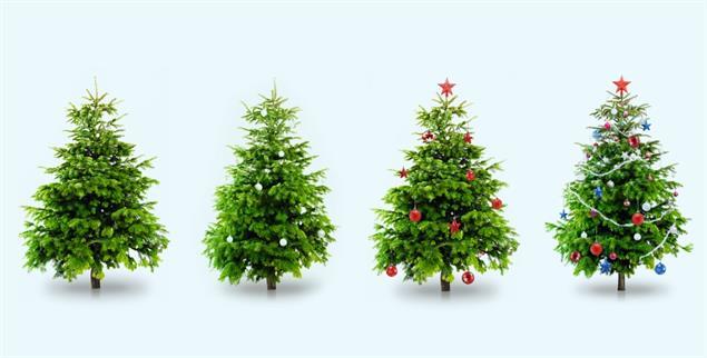 O Tannenbaum, o Tannenbaum, wie schön sind deine Blätter! (Foto:istockphoto/loops7)