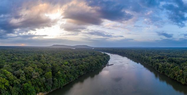 Einzigartig: Große Teile Guyanas sind mit teils unberührtem Regenwald bedeckt. Doch der Klimawandel verändert das Ökosystem schon heute. (Foto: urgewald/Tom Vierus)