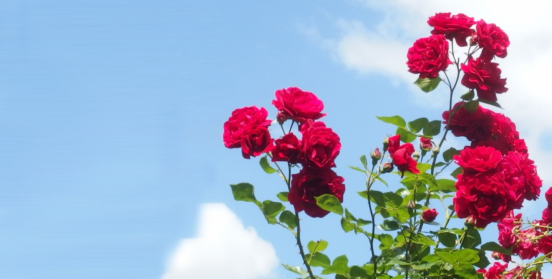Gartenimpressionen (Foto: Sophia Bergandt)