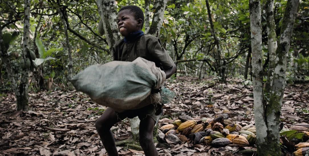 Ausbeutung im Jahr 2020: Noch immer schuften Afrikaner für europäische Interessen, wie dieser Junge auf einer Kakaoplantage von Côte d'Ivoire.(Foto: Laif/Rosenthal)